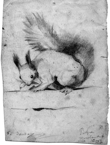 Drawing «Little squirrel», coal pencil on paper  41х27. <br>KM, Г-80.